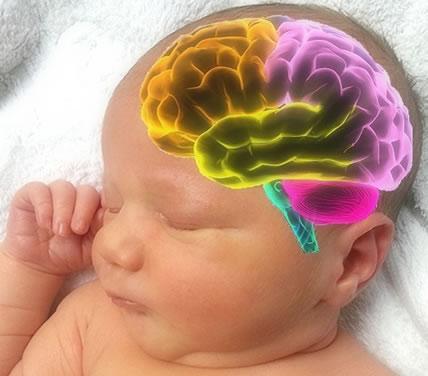 כיצד לקדם את התפתחות המוח של התינוקות