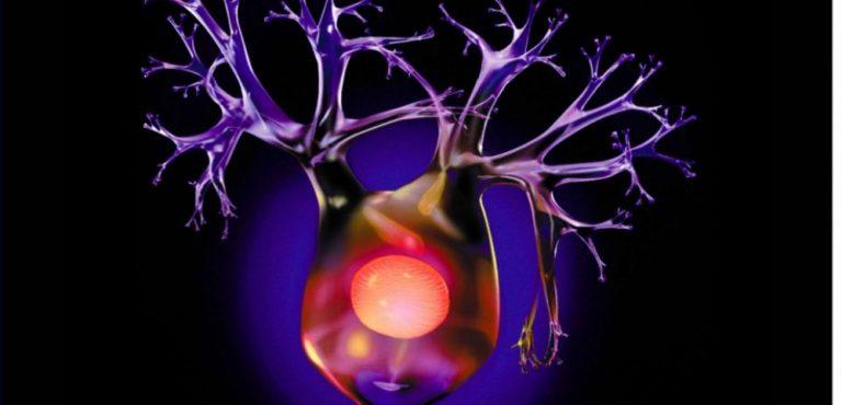 6 כללים מוזהבים כדי לשמור על המוח שלך בבניית נוירונים חדשים